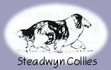 Staedwyn Collies