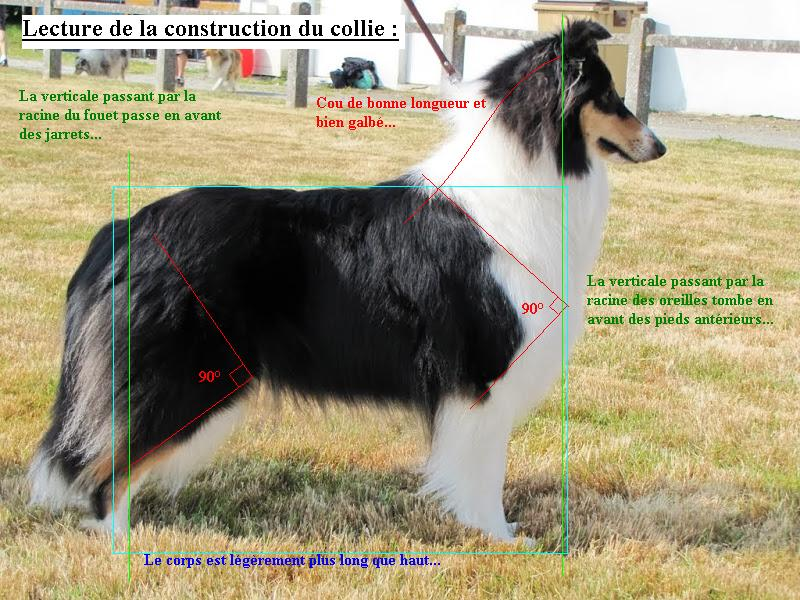 Construction du collie (photo C. Penverne)